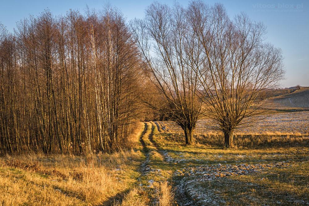 Fot. Witold Ochał, Zagorzyce, wierzby