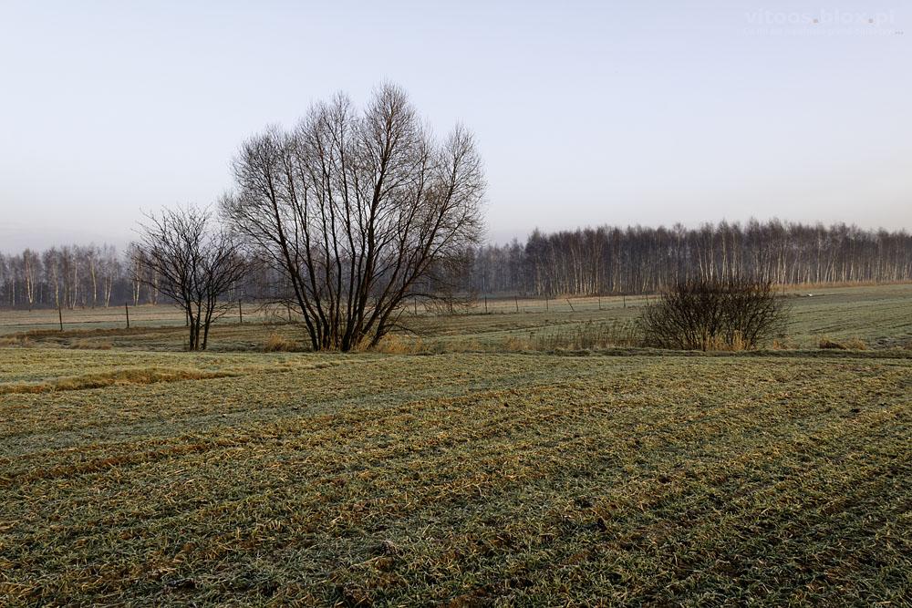 Fot. Witold Ochał, Krzywa