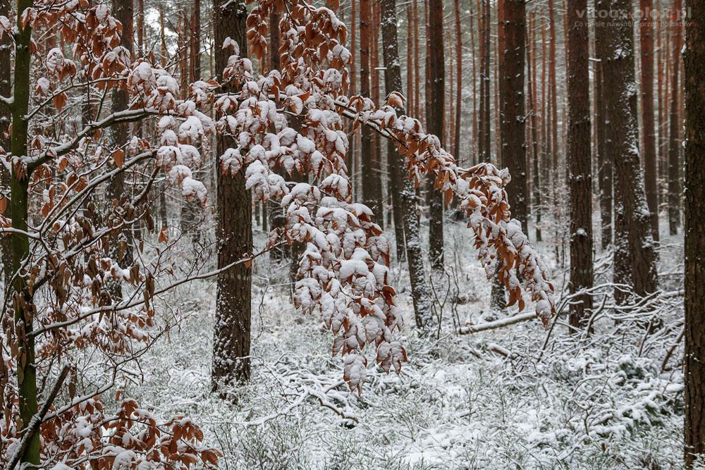 Fot. Witold Ochał, spacer po puchu