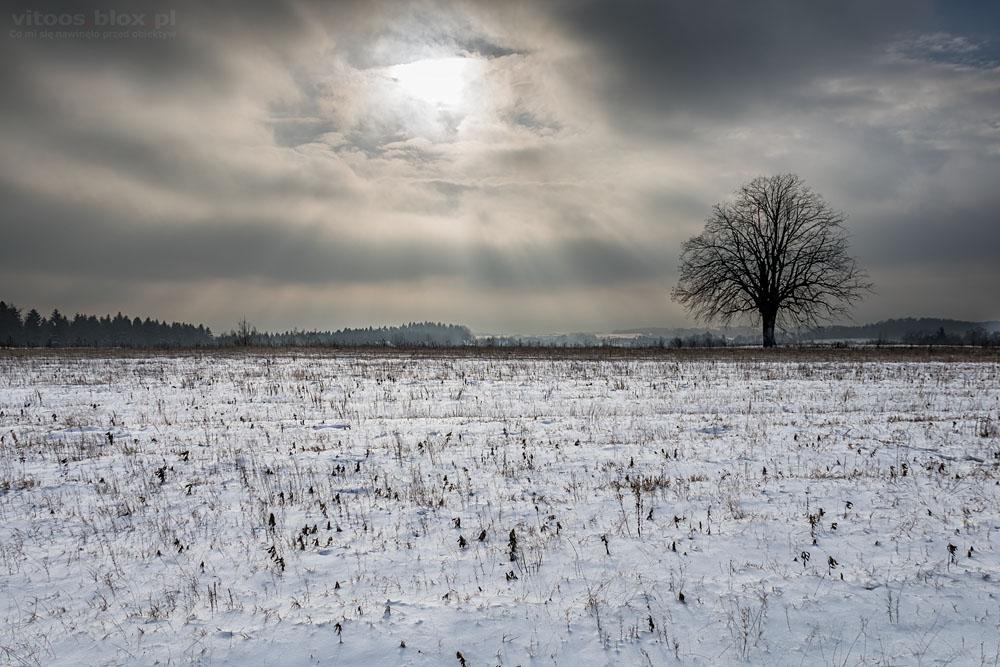 Fot. Witold Ochał