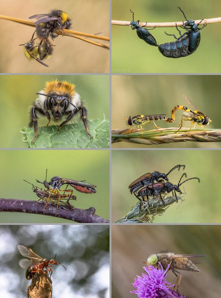 Fot. Witold Ochał, owady, makrofotografia