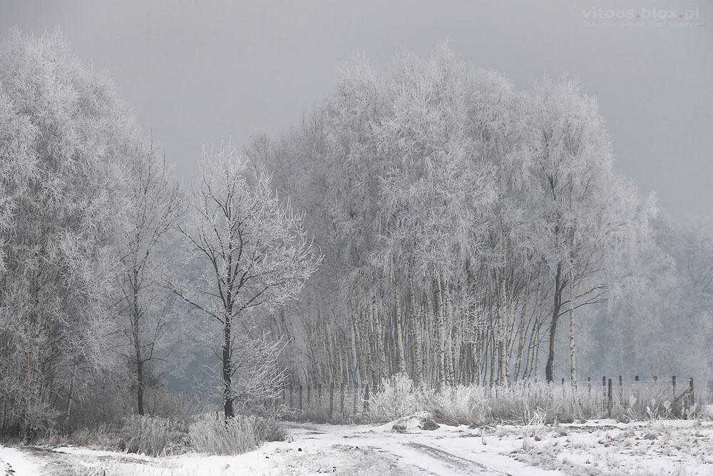 Fot. Witold Ochał, szadź