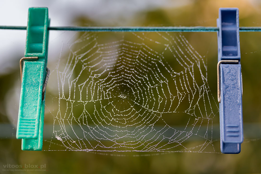Fot. Witold Ochał, pajęczyny