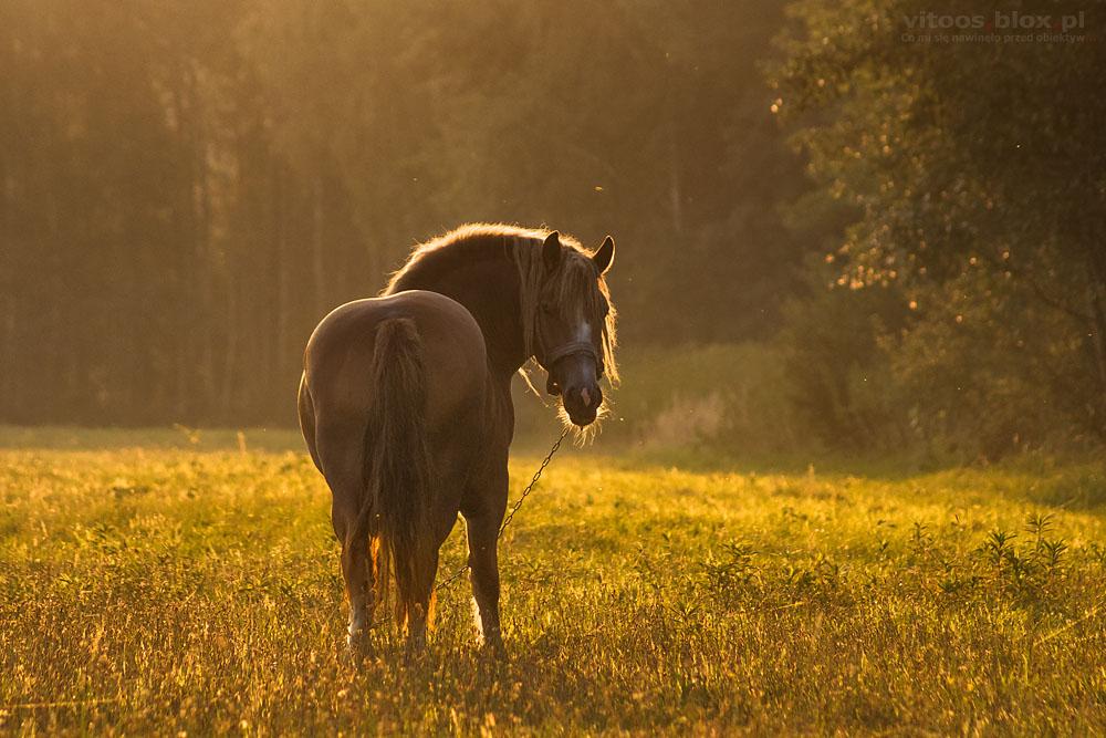 Fot. Witold Ochał, Krzywa, koń na pastwisku