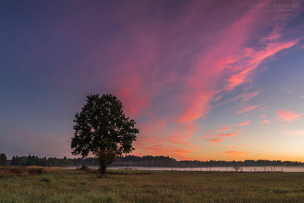 Fot. Witold Ochał, róże na niebie