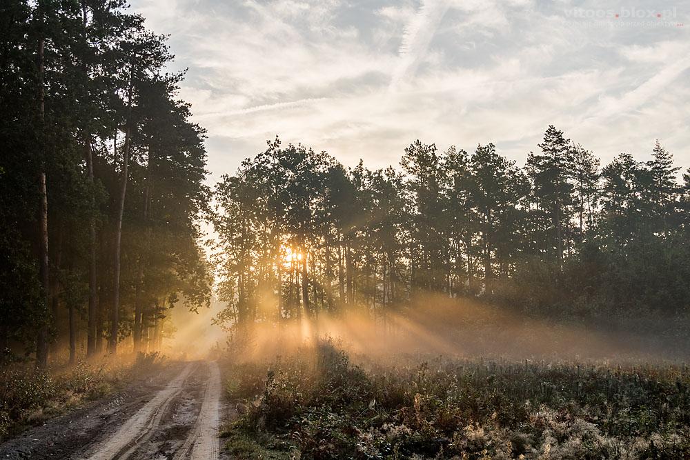 Fot. Witold Ochał, mglisty poranek w lesie