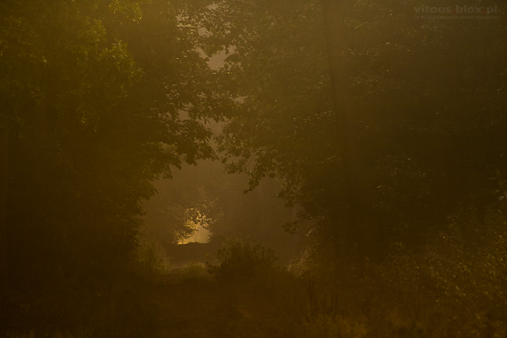 Fot. Witold Ochał, poranek w lesie