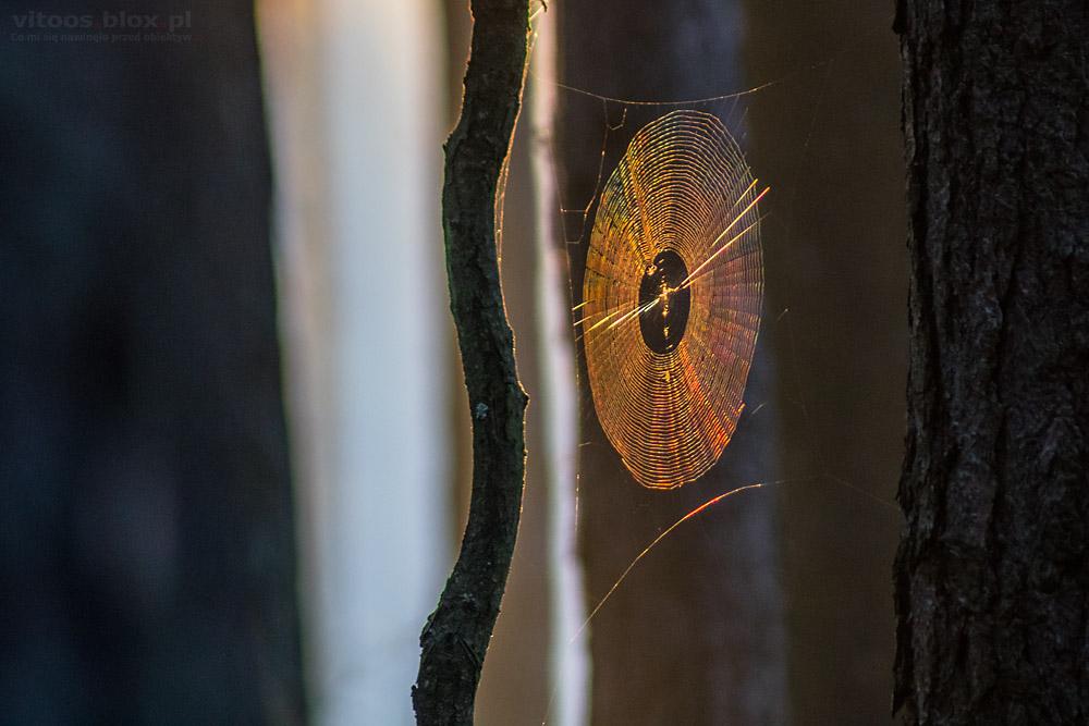 Fot. Witold Ochał tęcza w pajęczynie