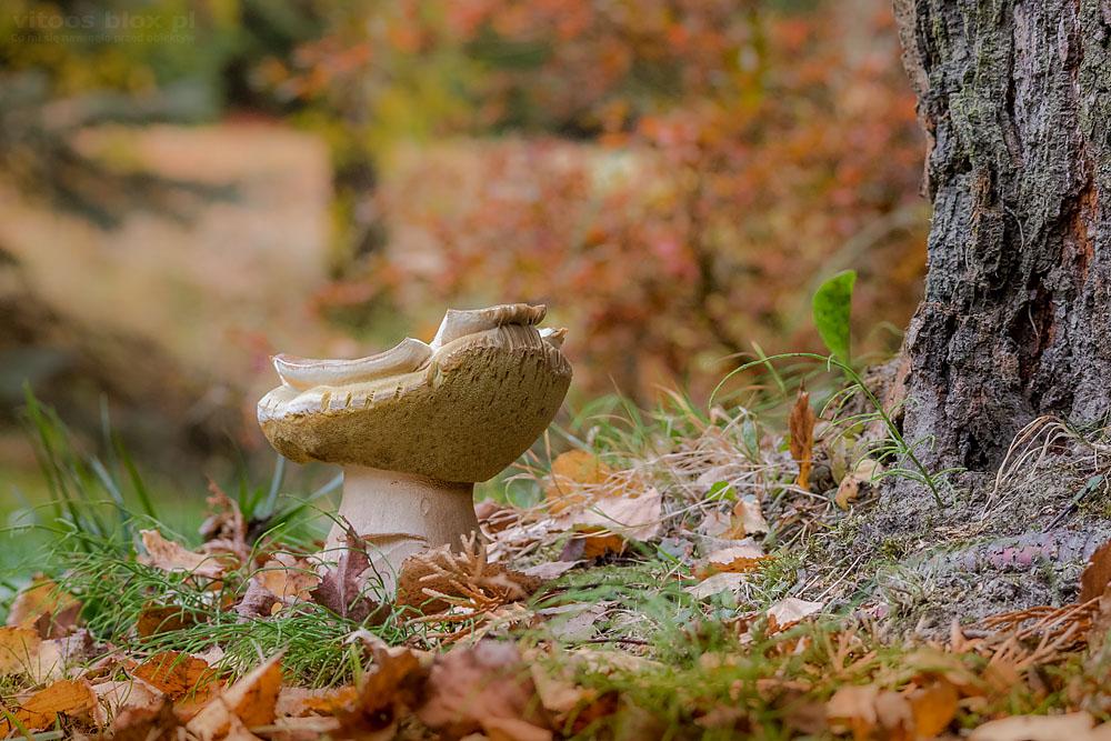 Fot. Witold Ochał, grzyby w lesie