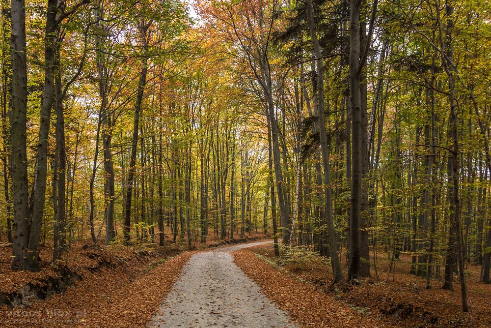 Fot. Witold Ochał, Pstrągowa, jesień w lesie